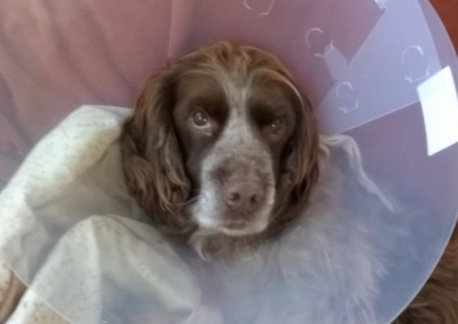 Megan the dog is recovering well from an operation.