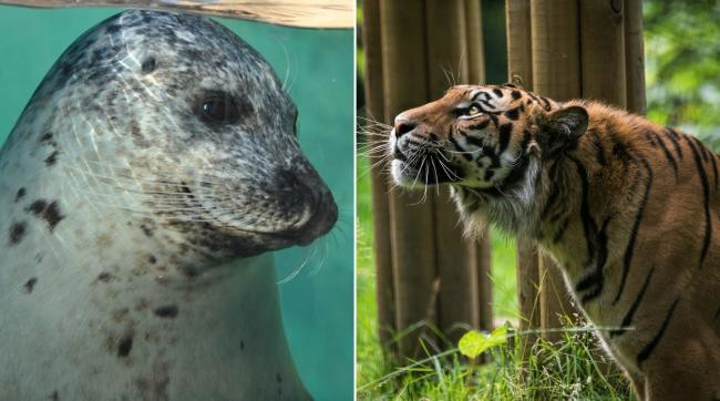 Concerns have been raised that no animal welfare fund has been established in Wales. Picture: SeaQuarium Rhyl and Welsh Mountain Zoo
